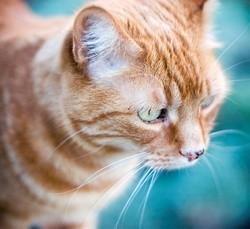 chat roux prend le bateau tout seul
