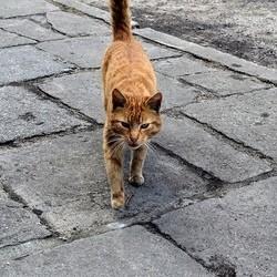 Des chats empoisonnés
