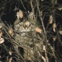 chat coincé dans un arbre