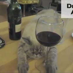 chat célibataire saint valentin