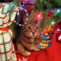 chat sapin de noel
