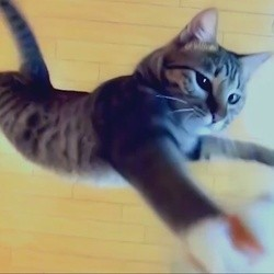 chat saut en hauteur