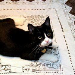 chat sauve femmes monoxyde carbone