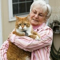 chat sauve maitresse anevrisme