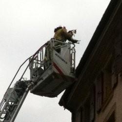 sauvetage chat immeuble pompiers
