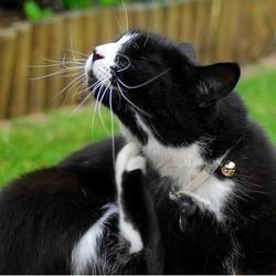 Les puces du chat et du chien les viter les rep rer et - Comment se debarrasser des puces dans le jardin ...