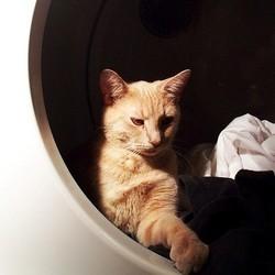 un chat enfermé dans un sèche linge