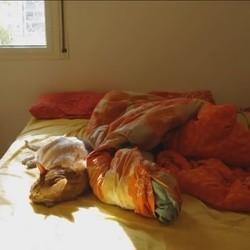 un chat fait la sieste au soleil