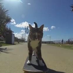 chat skateur