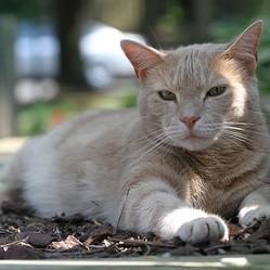 chat soleil chaleur