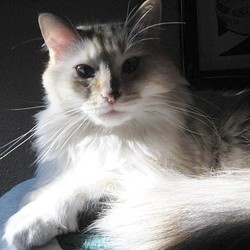une femme affirme avoir reconnu son chat perdu à la télé