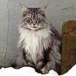 chat survit dans congélateur