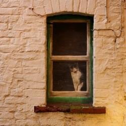 chat survit 18 jours sans boire sans manger