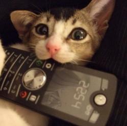 Chat telephone
