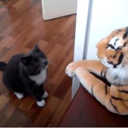 chat tigre en peluche