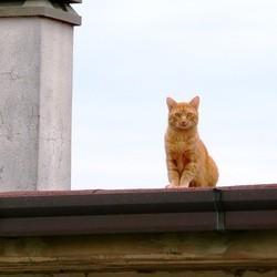 jeune homme decede chat toit