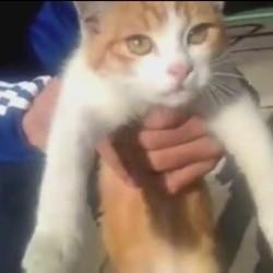chat torturé