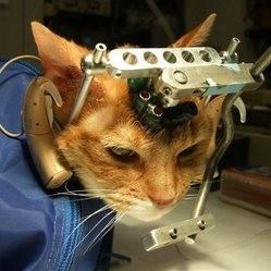 des chats torturés au nom de la science