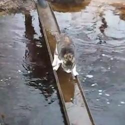 chat traverse riviere eau