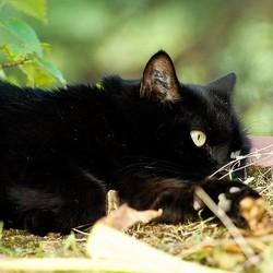 un chat tué par erreur dans un refuge