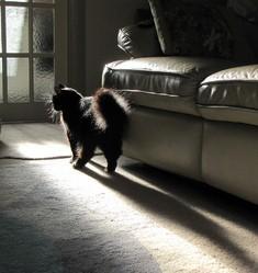 mon chat urine en dehors de sa liti re que faire comprendre son chat wamiz. Black Bedroom Furniture Sets. Home Design Ideas