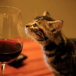 du vin pour chat