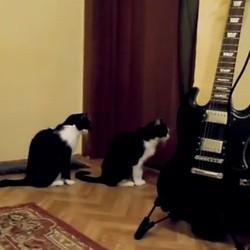 un chat présente ses excuses à un autre chat