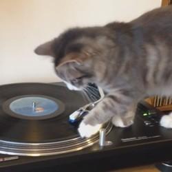 un chat joue avec un vinyle