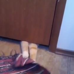 un chat voleur de tapis
