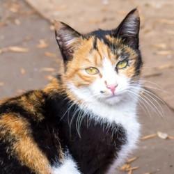 un chat vole les voisins de ses maîtres