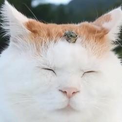 Shironeko le chat zen
