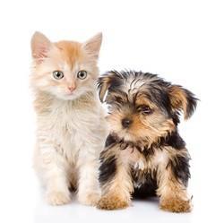chien et chat Wamiz