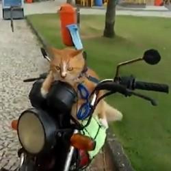 chat motard