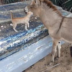 un chaton et un âne