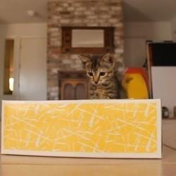 un chaton joue avec une boîte de mouchoirs