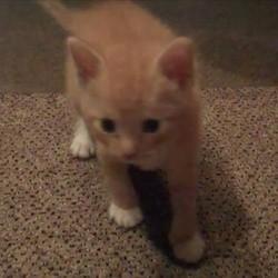 un chaton joue avec une boule de papier
