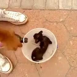 chaton brûlé
