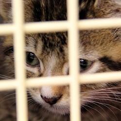 chaton dans une cage