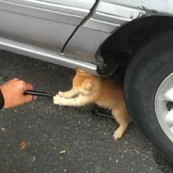 video de chaton