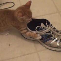 un chaton joue avec des chaussures