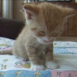 un chaton en train de s'endormir