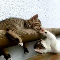 Petit chat impossible à réveiller