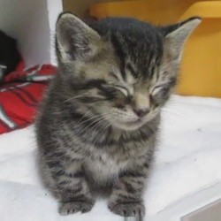 un chaton endormi