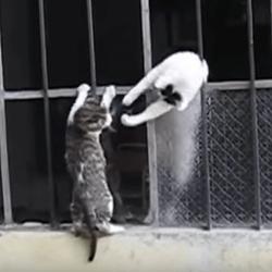 chaton et sa maman