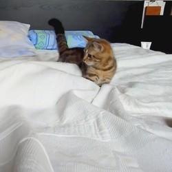 un chaton lutte contre un fantôme