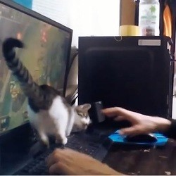 chaton jeu vidéo
