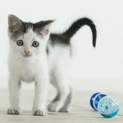 le jeu chez le chat