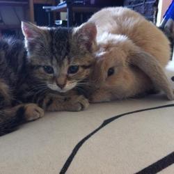 un lapin et un chaton aveugle deviennent les meilleurs amis du monde