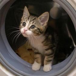 un chaton dans un lave-linge