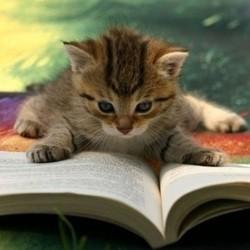 chaton livre